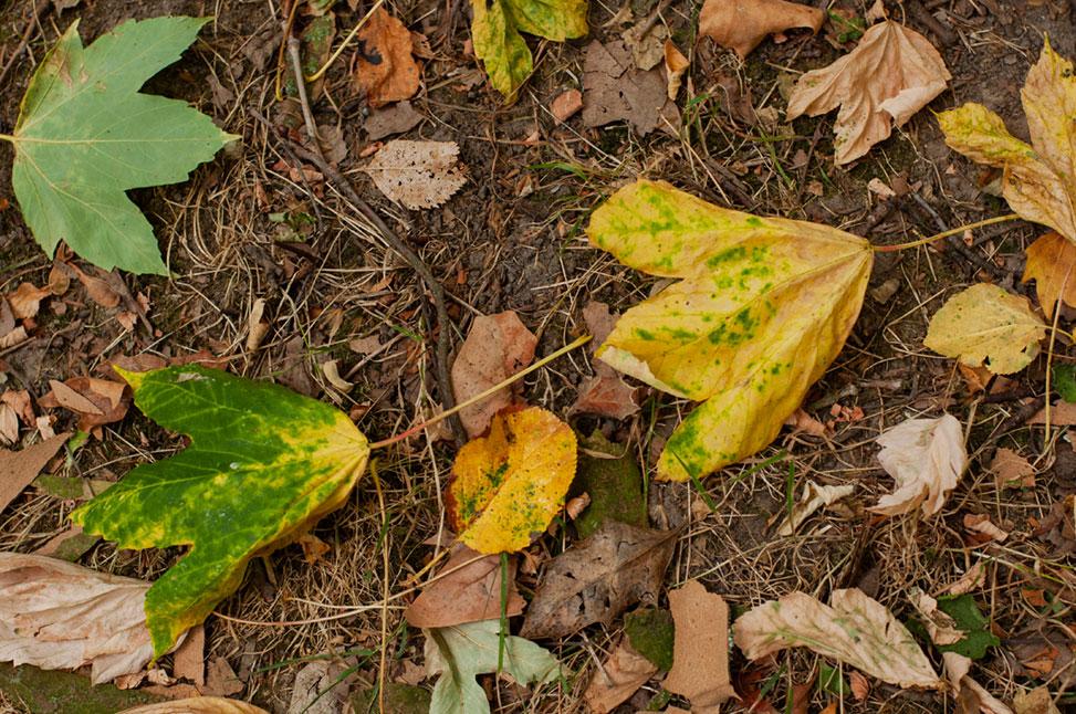 herbst blätter grün und gelb