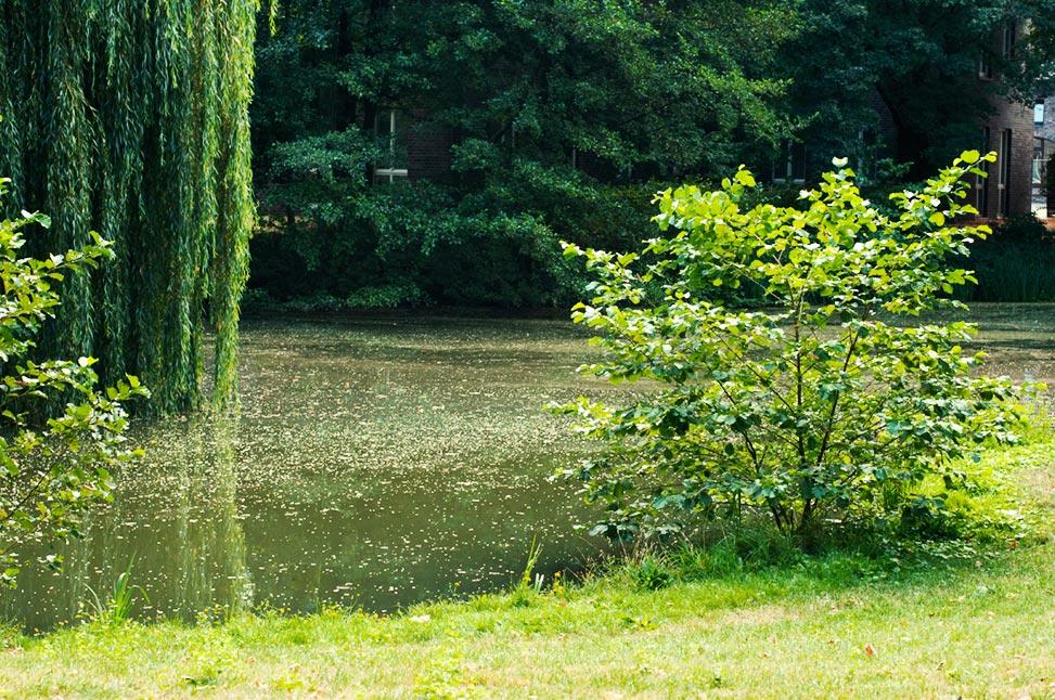 sollbrüggenpark am wasser