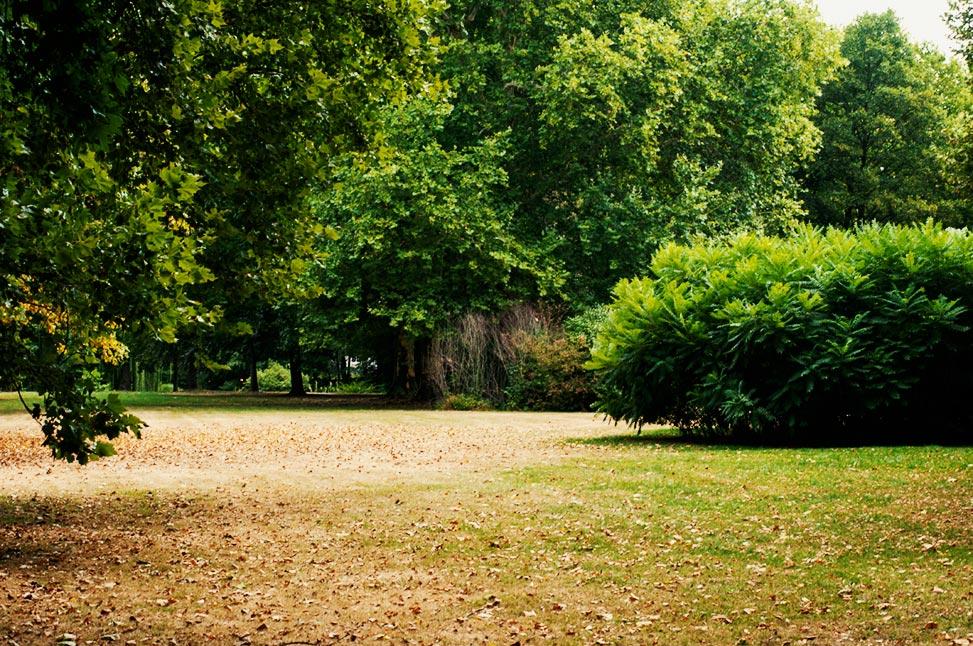 sollbrüggenpark mit busch, der wie ein ufo aussieht