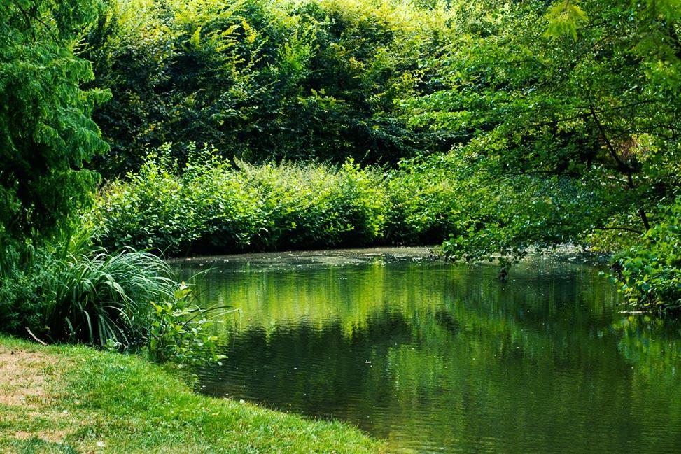 sollbrüggenpark alles saftig grün am wasser