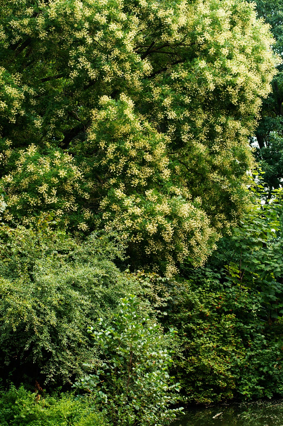 sollbrüggenpark blühende Bäume