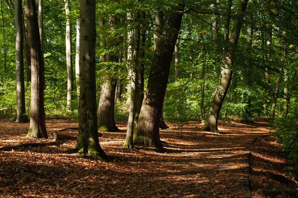 Kaiserpark - Stadtwald