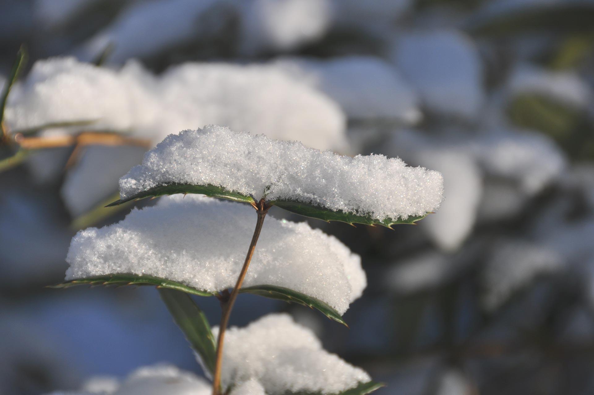 Kaiserpark im Schnee