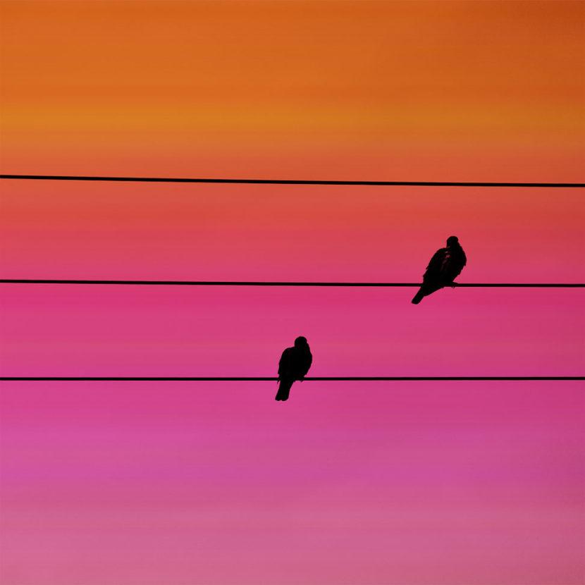 on the line birds