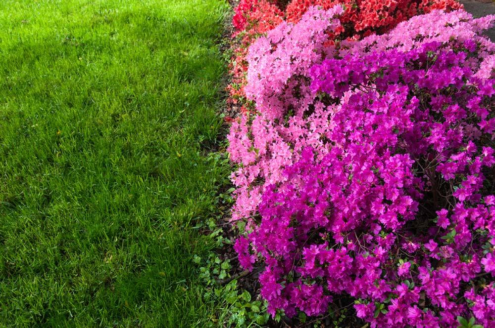 In Rausch der Farben – Pink