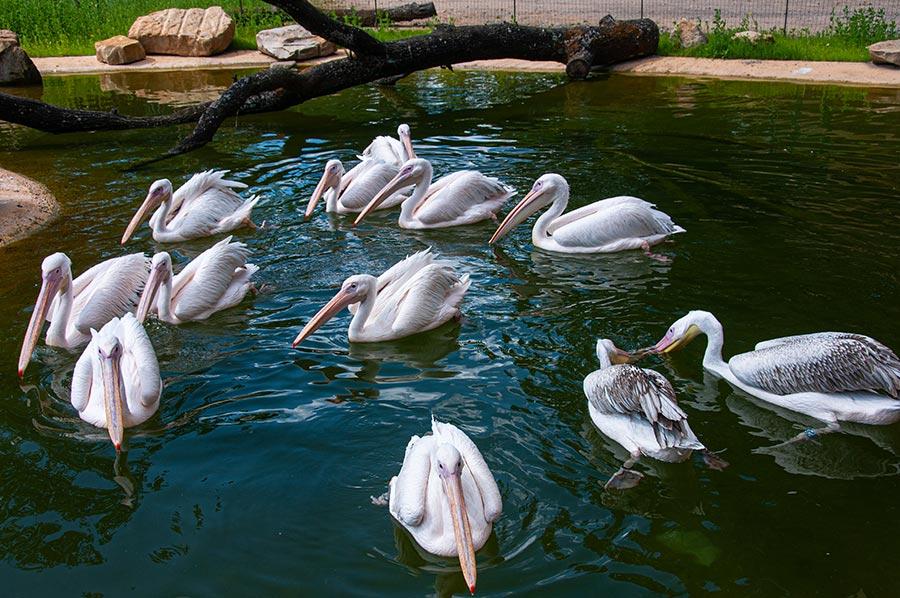 Pelikan-Lagune