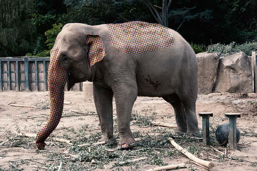 Lauschangriff im Zoo
