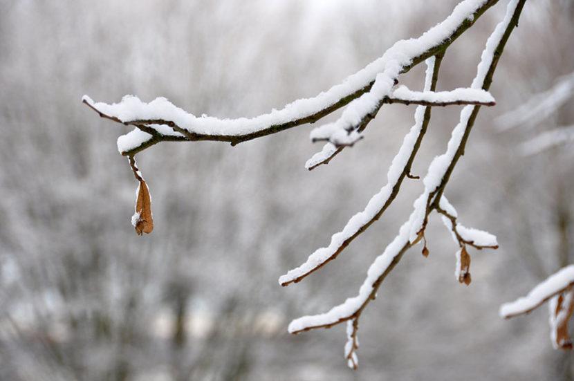 Es hat geschneit – Äste mit Schnee
