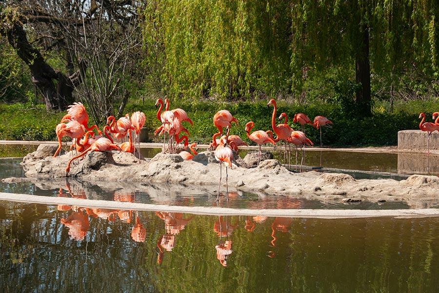 Flamingos Krefelder Zoo